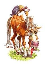 Old War Horse
